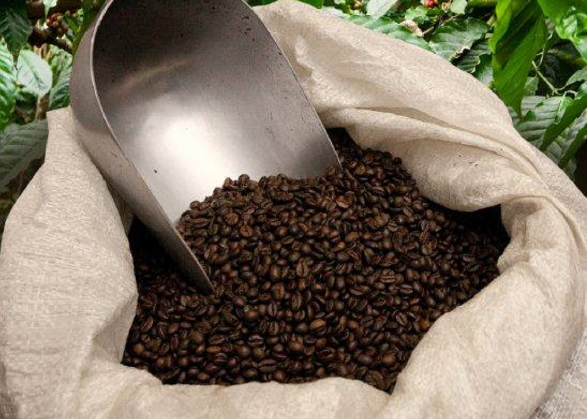 pianta_caffè